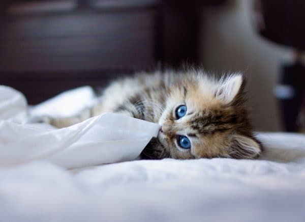 К чему снятся котята мужчине