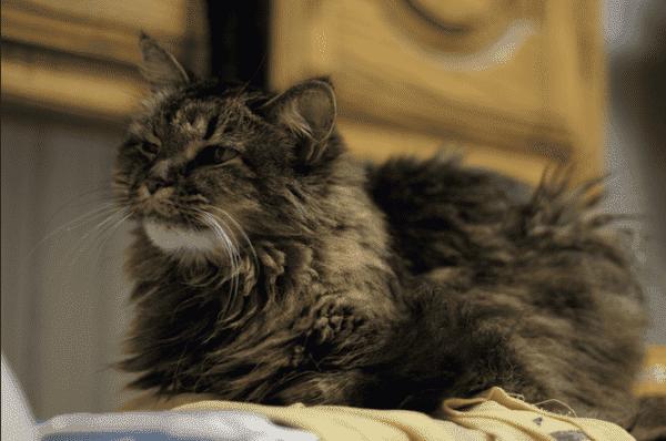 Как ухаживать правильно за старой кошкой