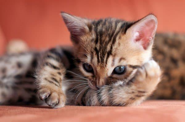 Какие имена для котов выбирать не стоит