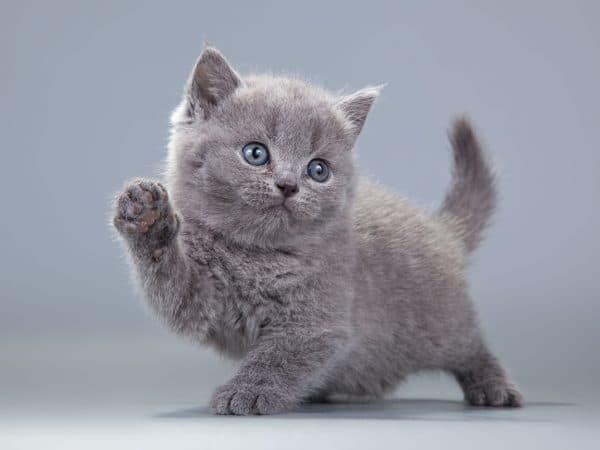 Клички для кошек по профессии или хобби хозяина