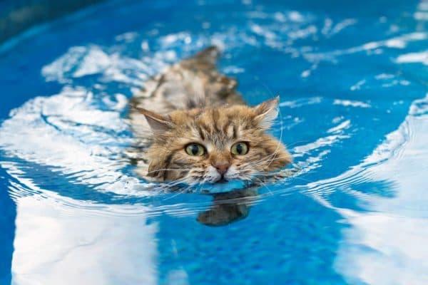 Кошки и коты которые любят воду