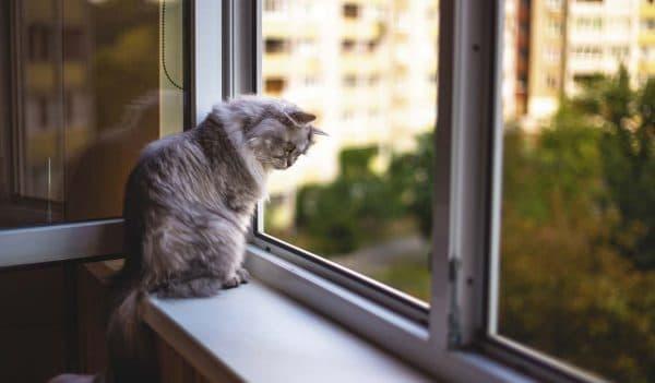 Кошки любят сидеть на окне почему читайте статью