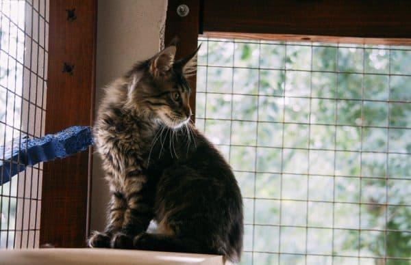 Кошки любят сидеть на окне почему