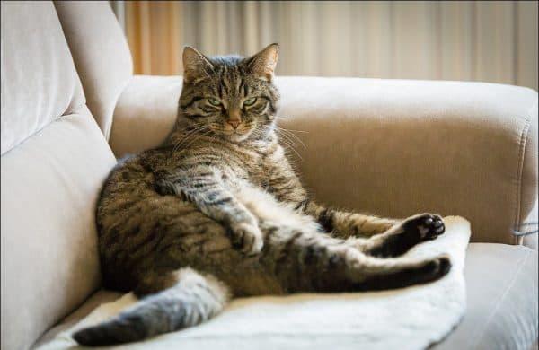 Кто в доме главный. Вы или кошка