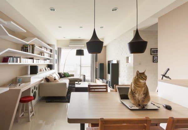 Можно ли запирать кошек в одиночестве