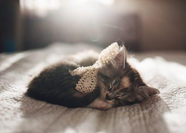 О чем говорит расцветка котенка во сне
