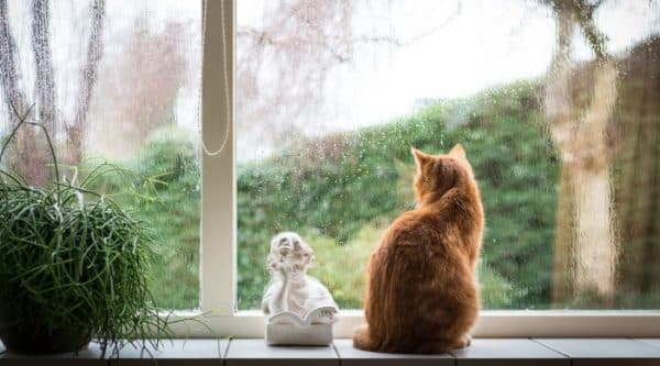 Почему кошки любят сидеть на окне читайте статью
