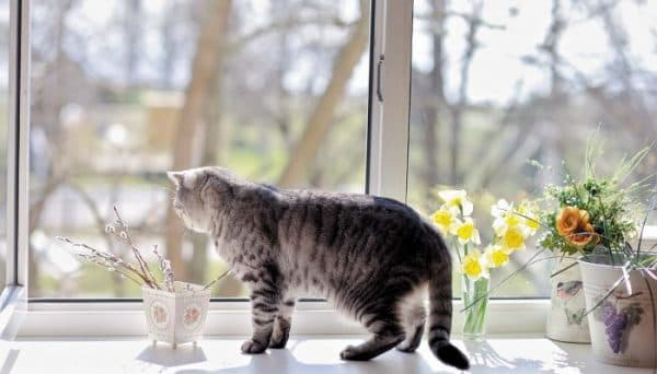 Почему кошки любят сидеть на окне