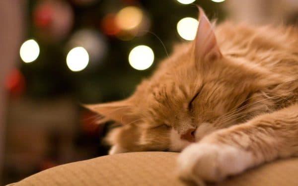 Почему кошки такие ленивые