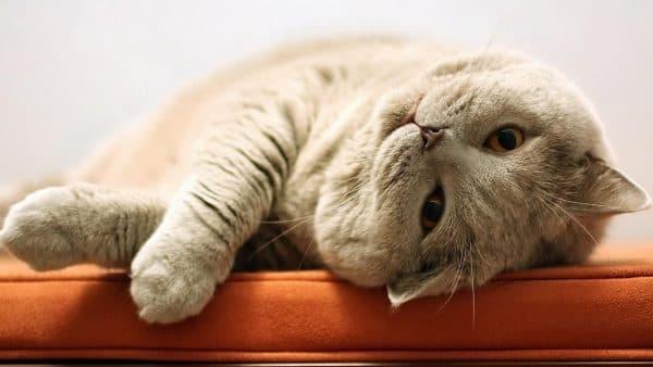 Почему коты такие ленивые читайте статью