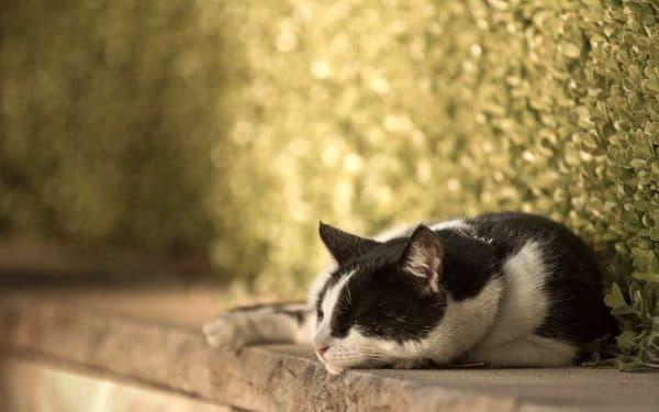 Почему коты такие ленивые