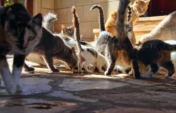 Почему на Кипре так много кошек читайте статью