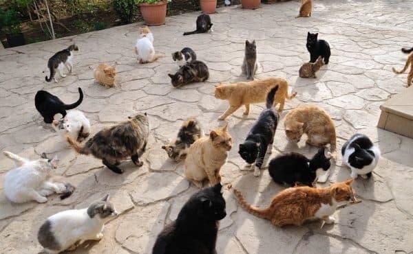 Почему на Кипре так много кошек