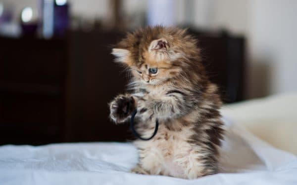 Подбор клички по породе и поведению кошке
