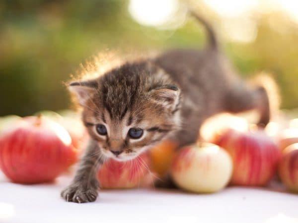 Популярные имена кошек читайте статью
