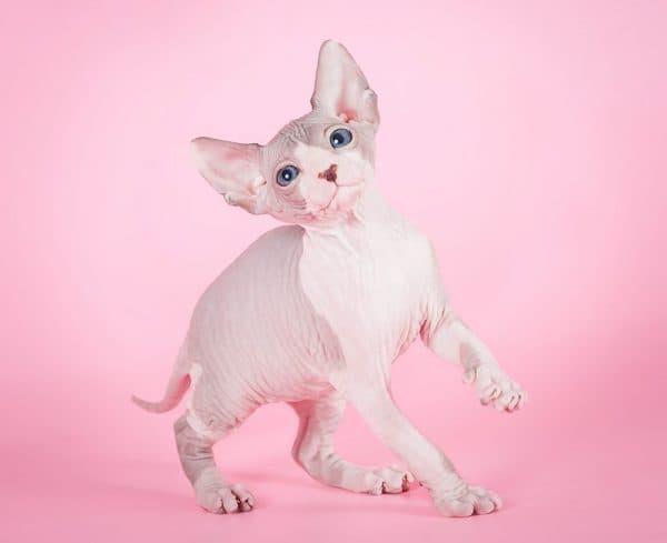 Популярные имена кошек