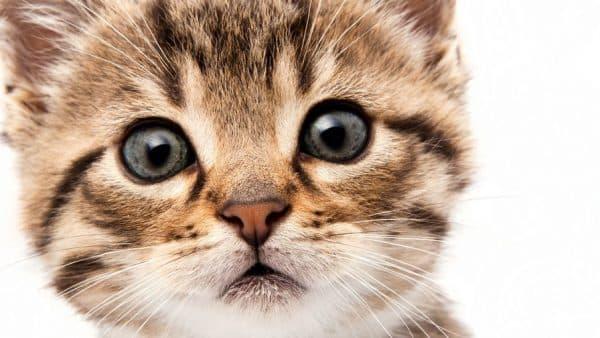 Простые имена для кошек