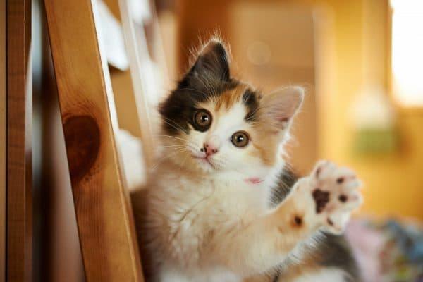 Простые имена для котов читайте статью