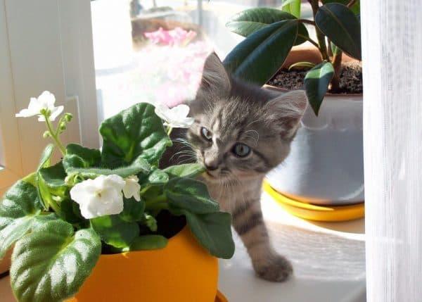Растения которые не любят кошечки читайте статью