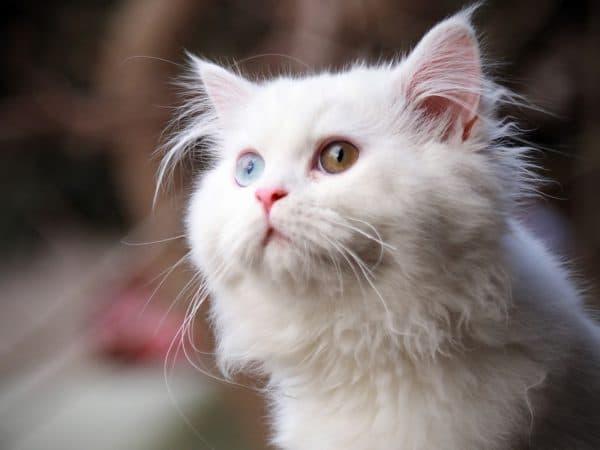 Русские имена для котов читайте статью
