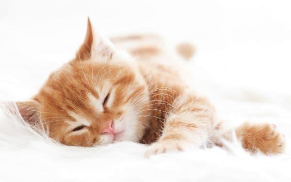 Сон с рыжим котенком