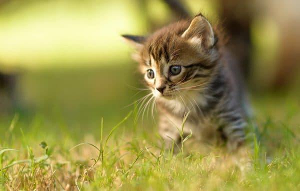 Состояние здоровья и внешний вид котенка