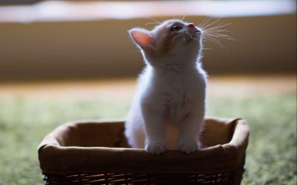 Список простых кличек для котов