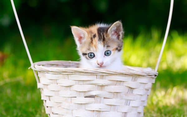 Список самых популярных кошачьих имен