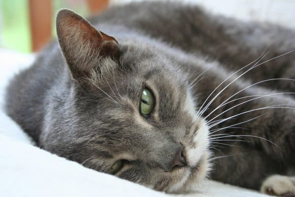 Старая кошка в доме