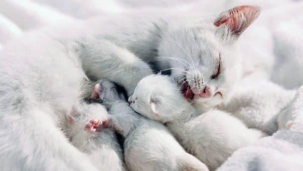Увидеть во сне кошку с котятами мужчине что значит