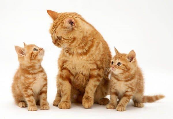 Увидеть во сне кошку с котятами мужчине