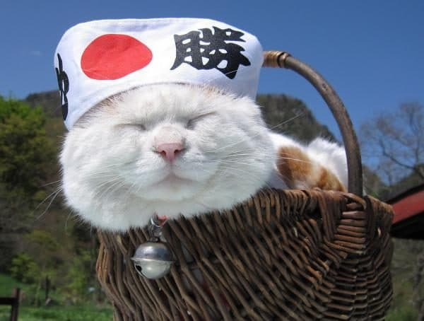 Японские имена для кошек читайте статью