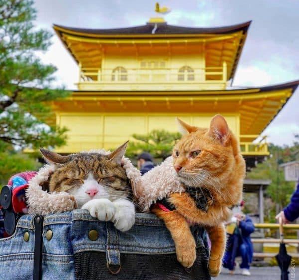 Японские имена для кошек