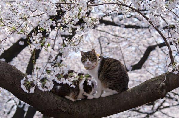 Японские клички для кошек, взятые из мифологии
