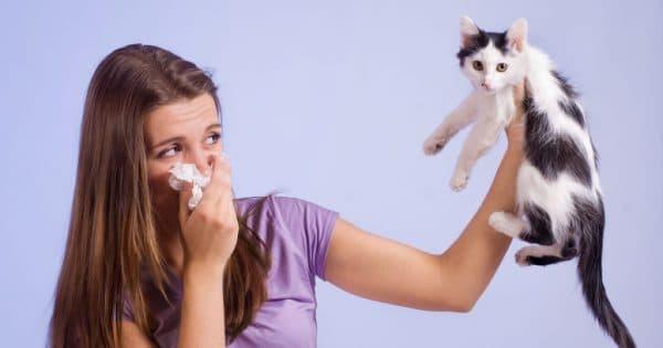 Айлурофобия - боязнь кошек читайте статью