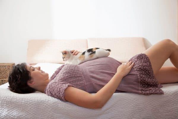 Беременным нельзя гладить котов