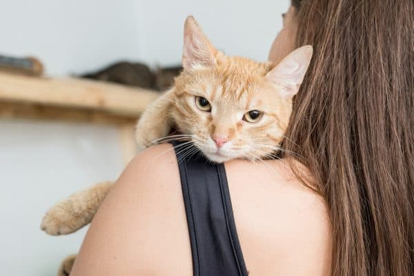 Человек – друг или кормящий раб коту