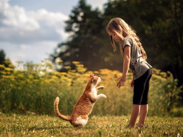 Человек и кошка кто они