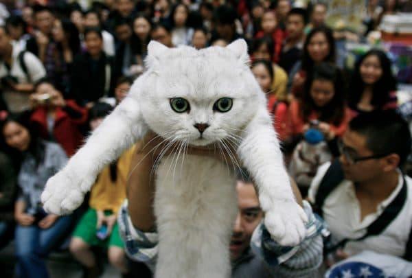 Едят ли кошек в Китае