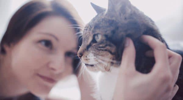 Есть ли душа у кошек и что происходит после смерти