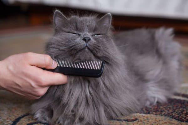 Груминг кошек что включает