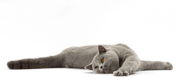 Как кошки переносят одиночество читайте статью