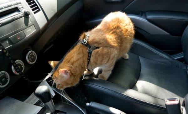 Как перевозить кошку в машине читайте статью