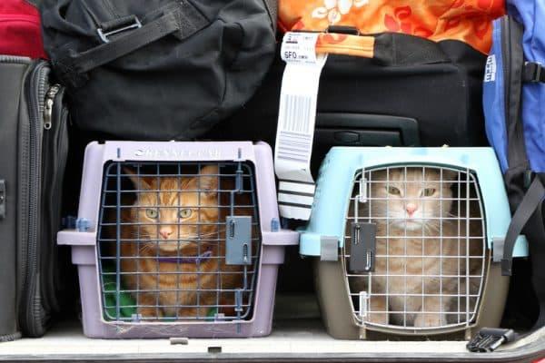Как перевозить кошку в самолете читайте статью