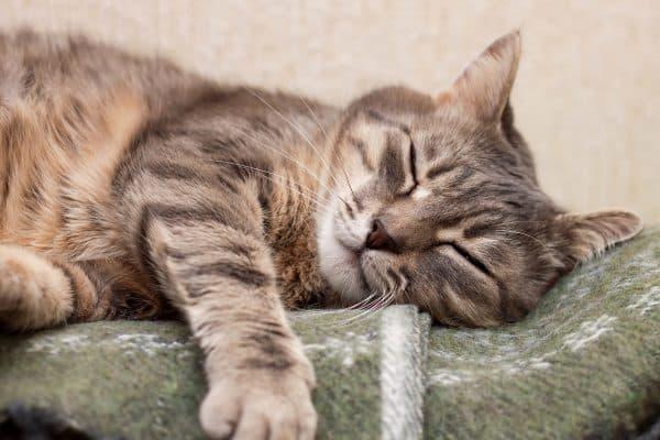 Как пережить смерть котика читайте статью