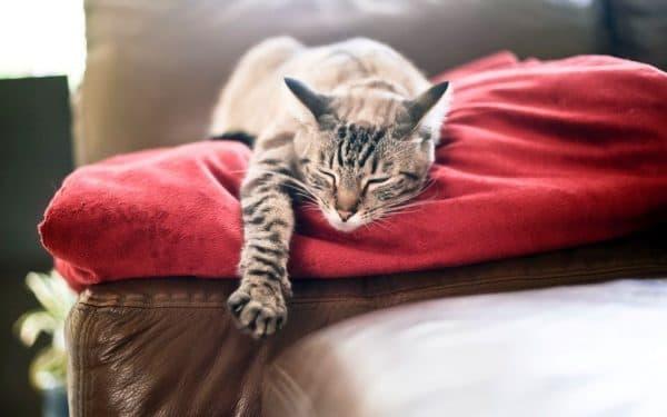 Как пережить смерть котика
