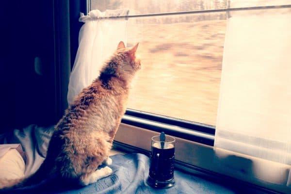 Как подготовить животное к поездке в поезде