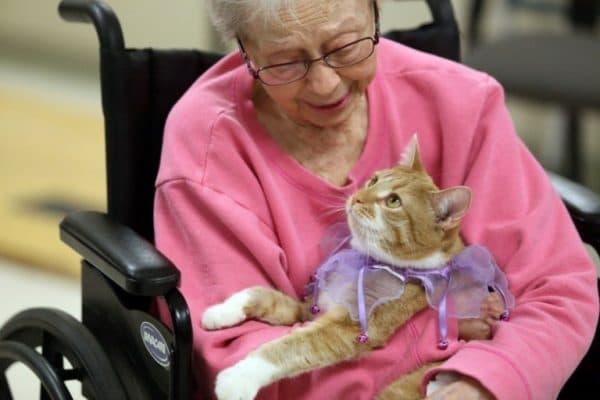 Какие кошки подходят для фелинотерапии