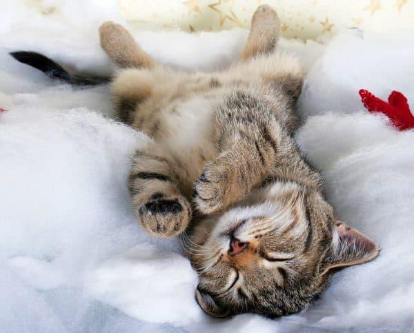 Кошка спит на спине причины
