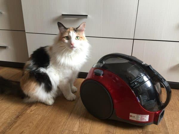 Кошки боятся пылесоса почему
